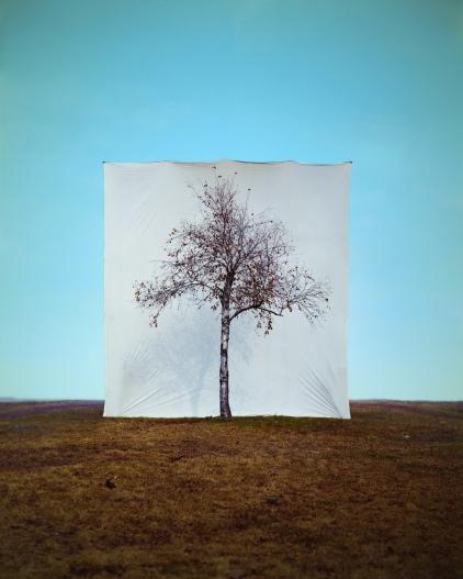 Myoung_Ho_Lee_Tree1_adSerie_Tree_2006_cMH_Lee_Court_Yossi_Milo_Gallery_NY_